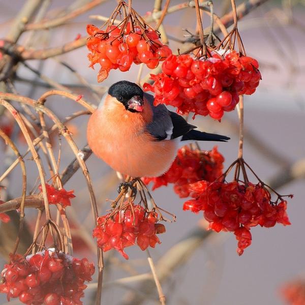Краса зимняя