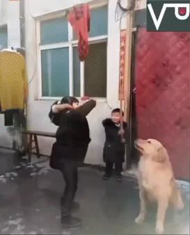 Нелегкие будни собаки в Азии