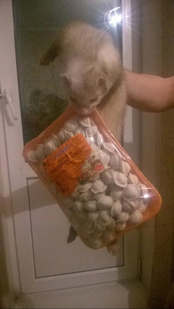 Когда хорек добрался до пакета с продуктами раньше тебя