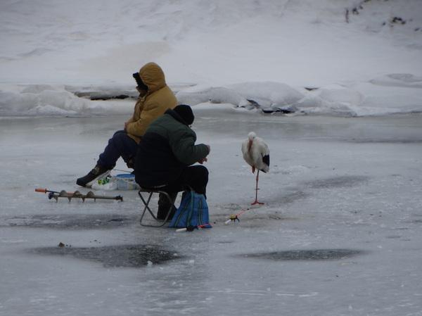 Ну что, клюёт? Фотография, Аист, Зима, Рыбалка, Рыба