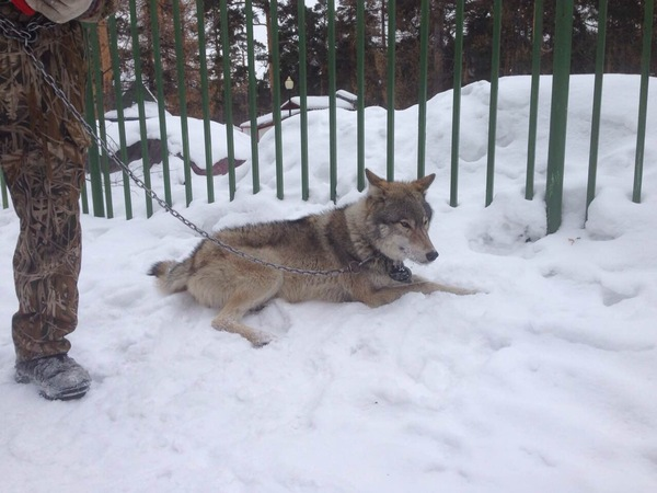 Волк Волк, Челябинск, Парк Гагарина
