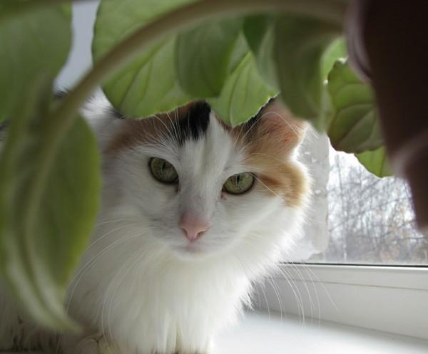 Почему нужно убирать все растения подальше Травоядная, Кот, Соблазн, Растения