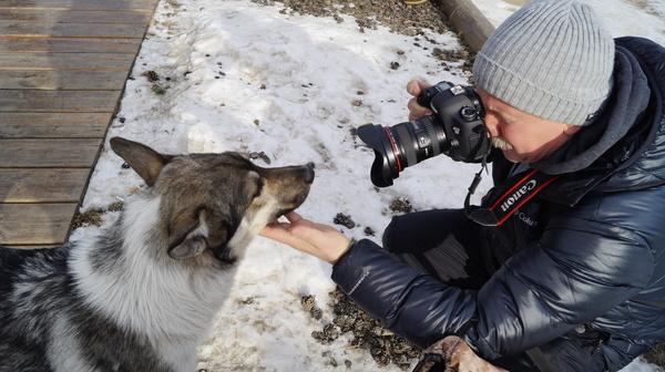 Смотри в кадр! Пожалуйста... Собака, Байкал, Ольхон, 2016