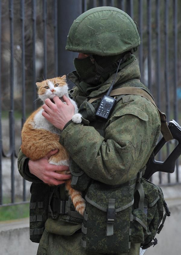 С Днем Защитника Котечества! Кот, 23 февраля, День Защитника Отечества, Военная форма, Солдаты