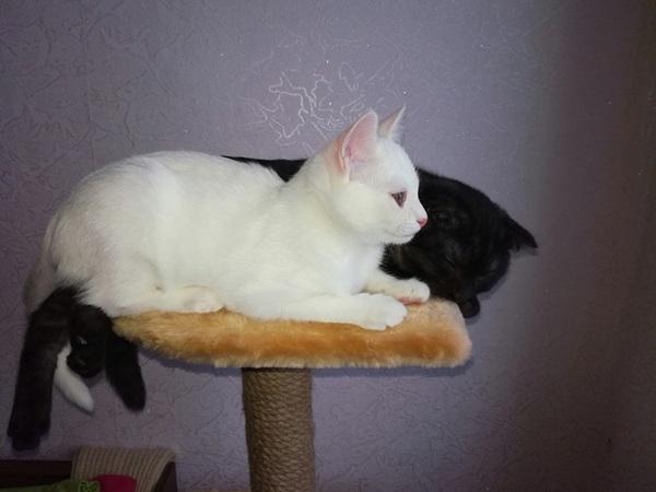 Котенок успешно растет Кот, Милота, Питомец, Животные