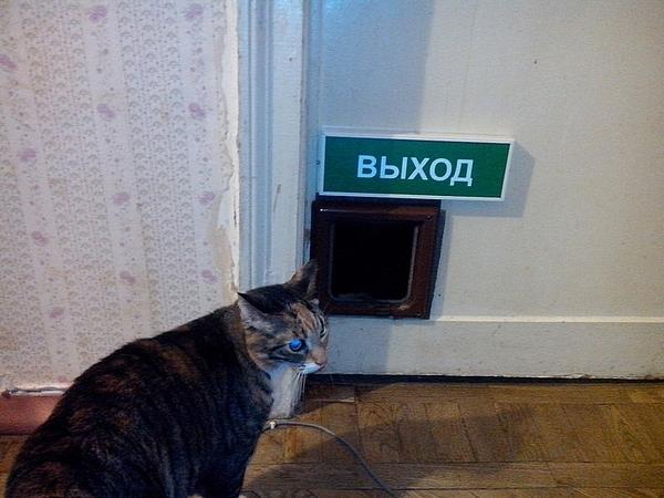 Так, запахло жареным. Смываемся. кот, табличка, выход, котомафия, котодверь, длиннопост, Пожарный выход