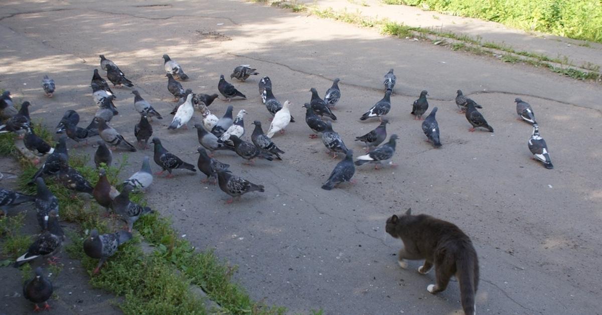 фото голубя с воробьями прикол новички, продвинутые найдут