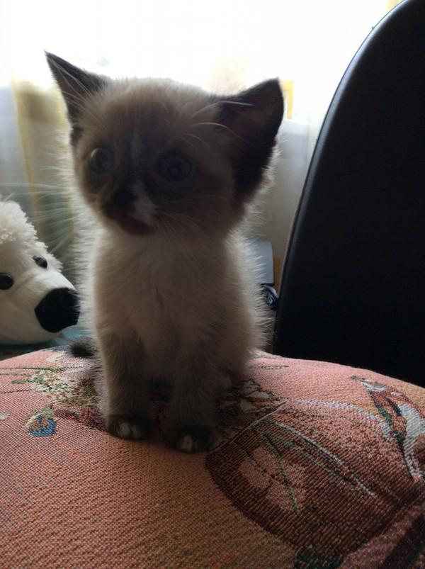 Подобрали маленького котенка, весила меньше 400 грамм кот, подобрыш, Мелисса, питомец, длиннопост