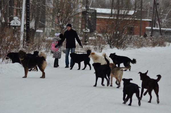 Стая бродячих собак искусала кормящую мать на Победе в Кривом Роге. Грудной младенец не пострадал. Новости, Украина, бродячие псы, собака, отдам в хорошие руки, помощь, в добрые руки, длиннопост