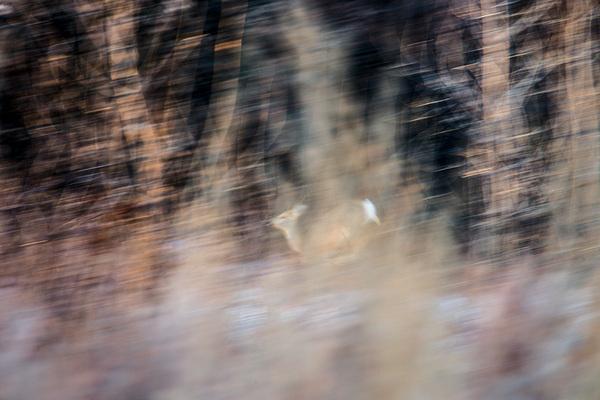 Территория восстановления дикой природы Астрахань, Природа, Лошади, Кабан, Фазан, Евгений Полонский, Длиннопост