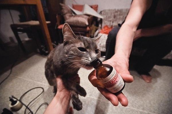 1 марта: день российских кошек + международный день борьбы с наркоманией = день борьбы с кошачьей наркоманией.