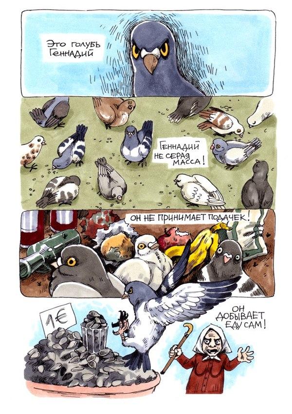 Голубь Геннадий Комиксы, Голубь, Птицы, Длиннопост, Koropublic