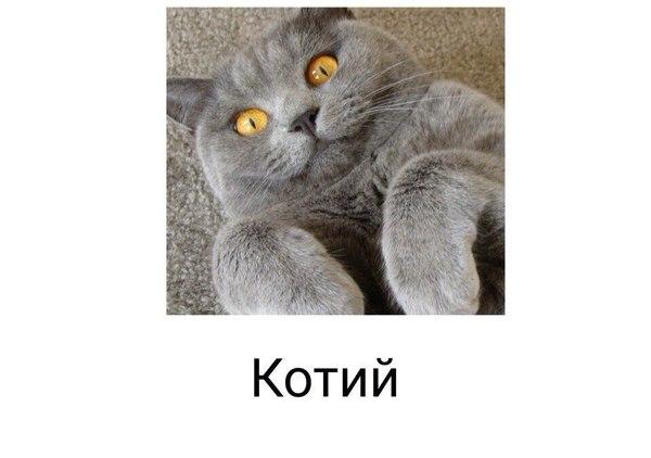 Котий как химический элемент Кот, ВКонтакте, Длиннопост