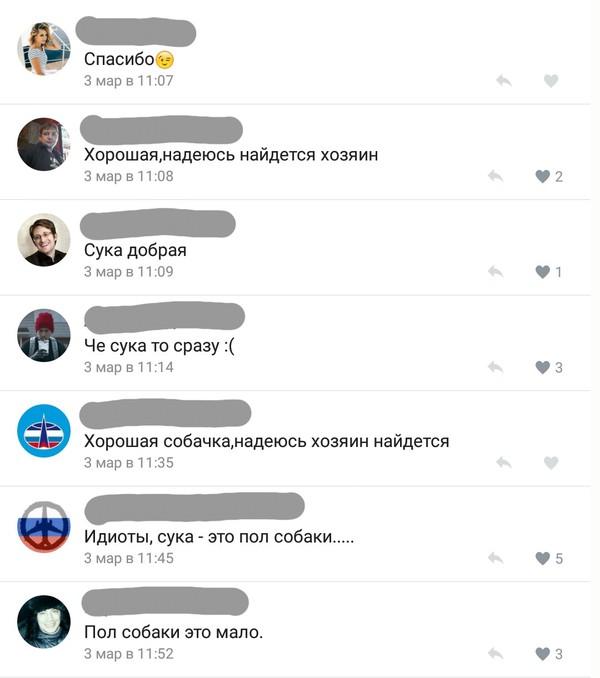 Пол собаки это мало ВКонтакте, потеряшка, Собака, длиннопост