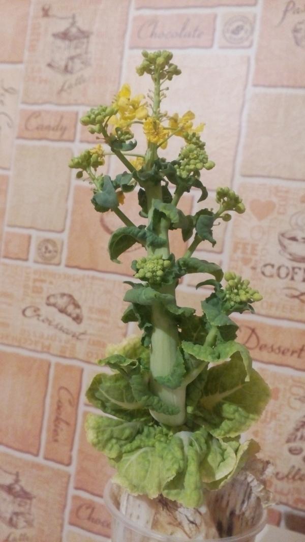 Цветок капусты к 8 марта Цветок, Капуста, 8 марта