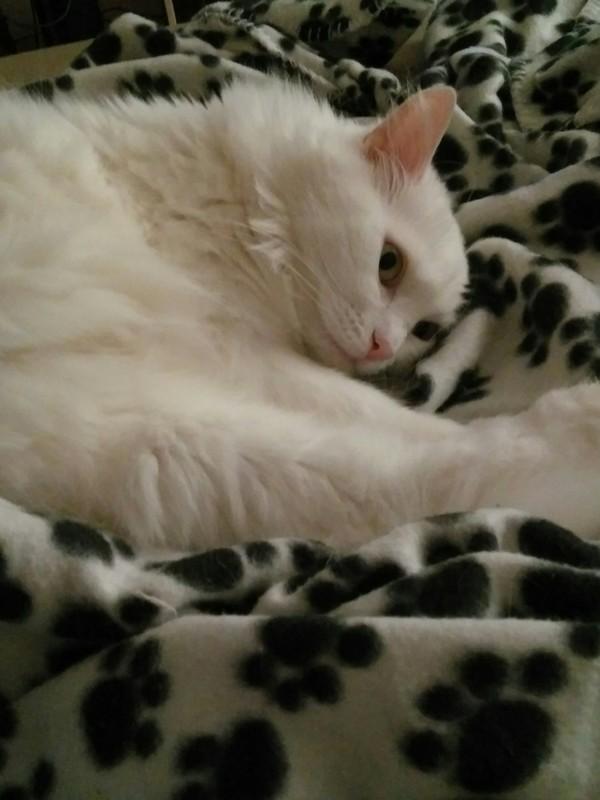 Что я делаю со своей жизнью Кот, Фотография