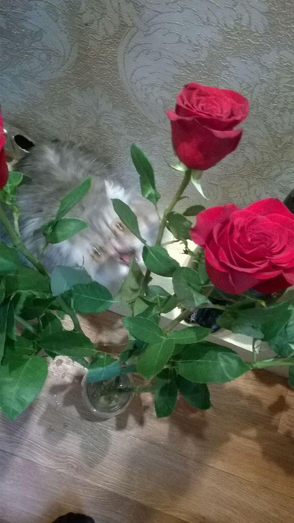 За секунду до... или кошка ненавидит цветы. Кот, Цветы, Международный, Женское, День