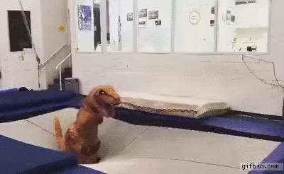 Тираннозавры тоже имеют право расслабиться