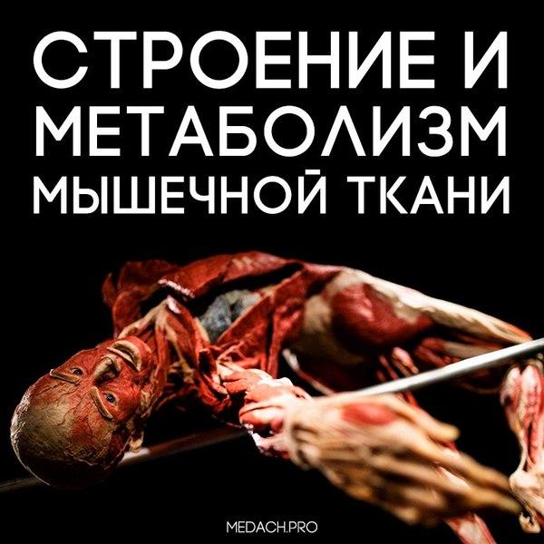 Строение и метаболизм мышечной ткани Биология, Медицина, Биохимия, Физиология, Длиннопост, Мышцы