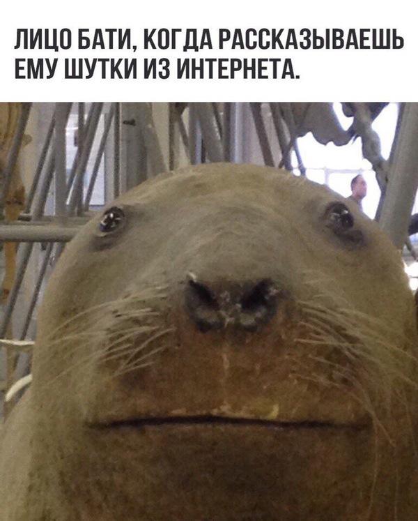 И мое лицо, когда мама скидывает шутки из Одноклассников..