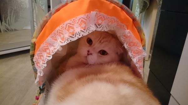 Идеально поместился кот, Коляска