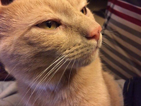 Когда вы собираетесь что-то сказать, но потом понимаете, что наверное не стоит Фотография, Кот, Выражение