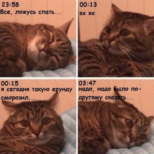 Ночные сомнения Кот, Сомнения
