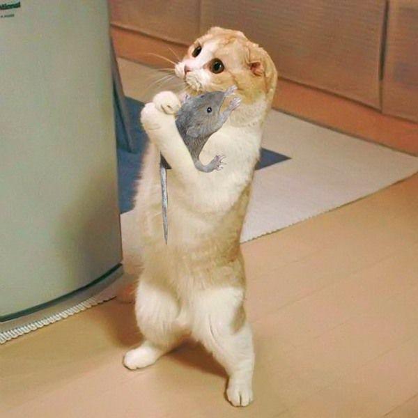 Ну запеки мне ее пожалуйста!)