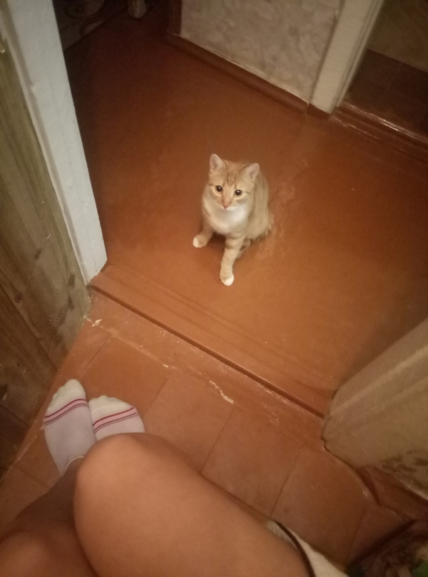 Привычка Кот, Привычка, Моё