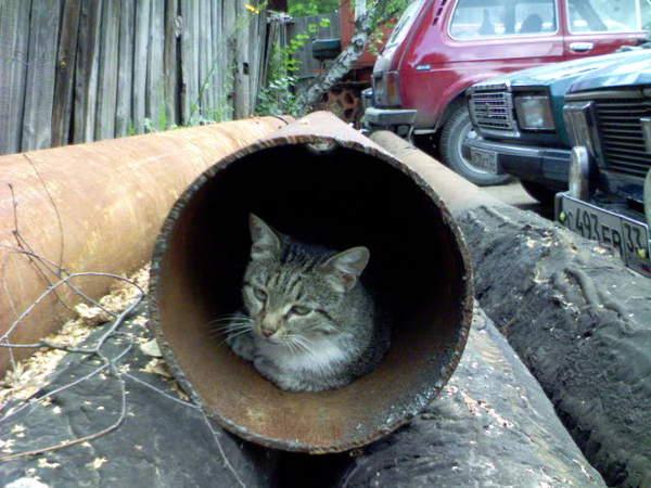 Тепло и любовь домашних животных кот, трубы тэц, сантехник, жесть