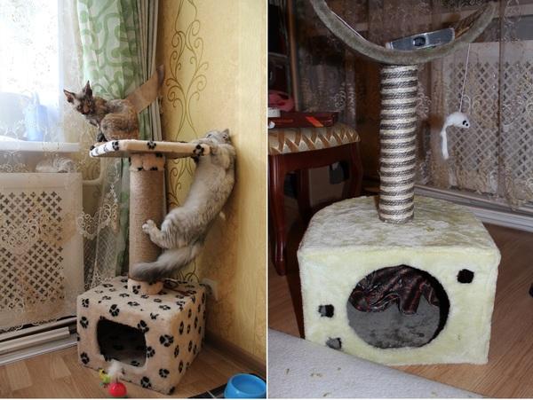 Уголок для двух кошек Семья, Кот, Стройка, Своими руками, Длиннопост