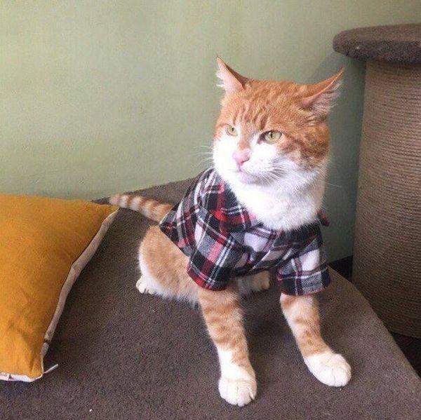 Просто котя в рубашке.
