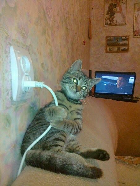 Мой кот ворует электричество