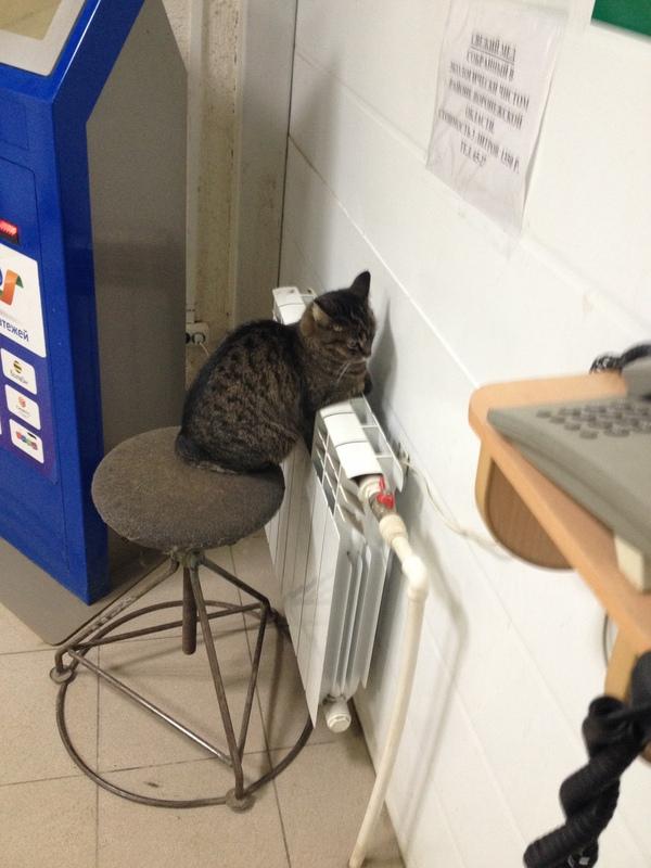 Страж проходной кот, фотография, От кота одна теплота