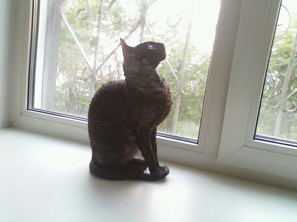 Моя кошка и синдром соседа Домашние животные, Кот, Длиннопост