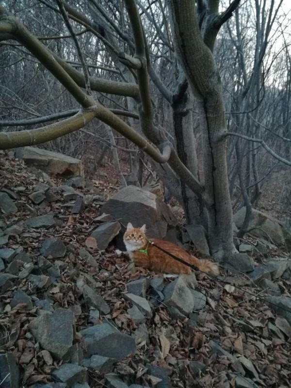 Прогулки с котом Кот, Владивосток, Кот Рыжий Кот!, Поход, Прогулка, Выгул, Моё, Длиннопост