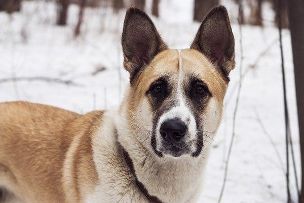 Потерялся пёс. Екатеринбург. Пропала собака, Екатеринбург, Доска объявлений, Собака, Помощь, Поиск животных