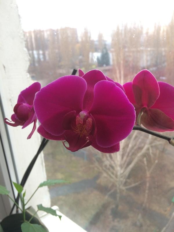 Весна пришла и в наш дом. Цветы, Весна, Кот, Длиннопост