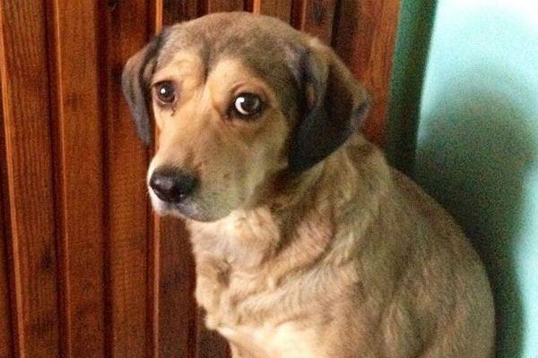 Осиротевшая собака три дня просидела у тела хозяина в Красноярске Собака, друг, верность