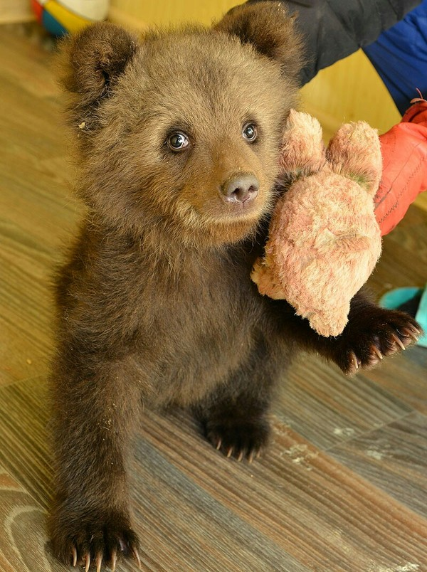 Спасибо за помощь! (пролистайте, пожалуйста, не знаю как удалить пост) Помощь, книгопоиск, поиск, медведь