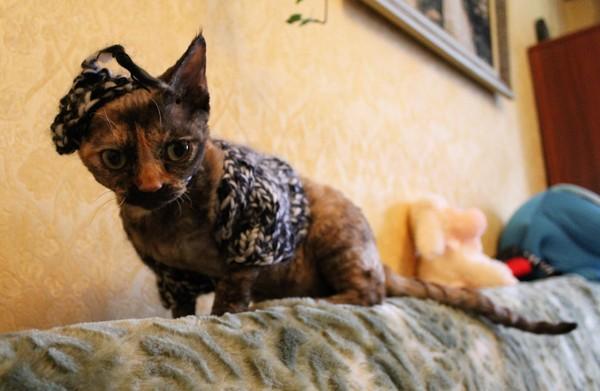 Носастая кошка чуть-чуть утеплилась