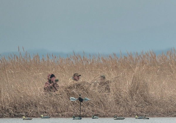 Браконьеры жестоко избили при свидетелях инспектора в Дальневосточном морском заповеднике. охота, браконьеры, избили мужчину, птицы, Приморья, длиннопост, криминал