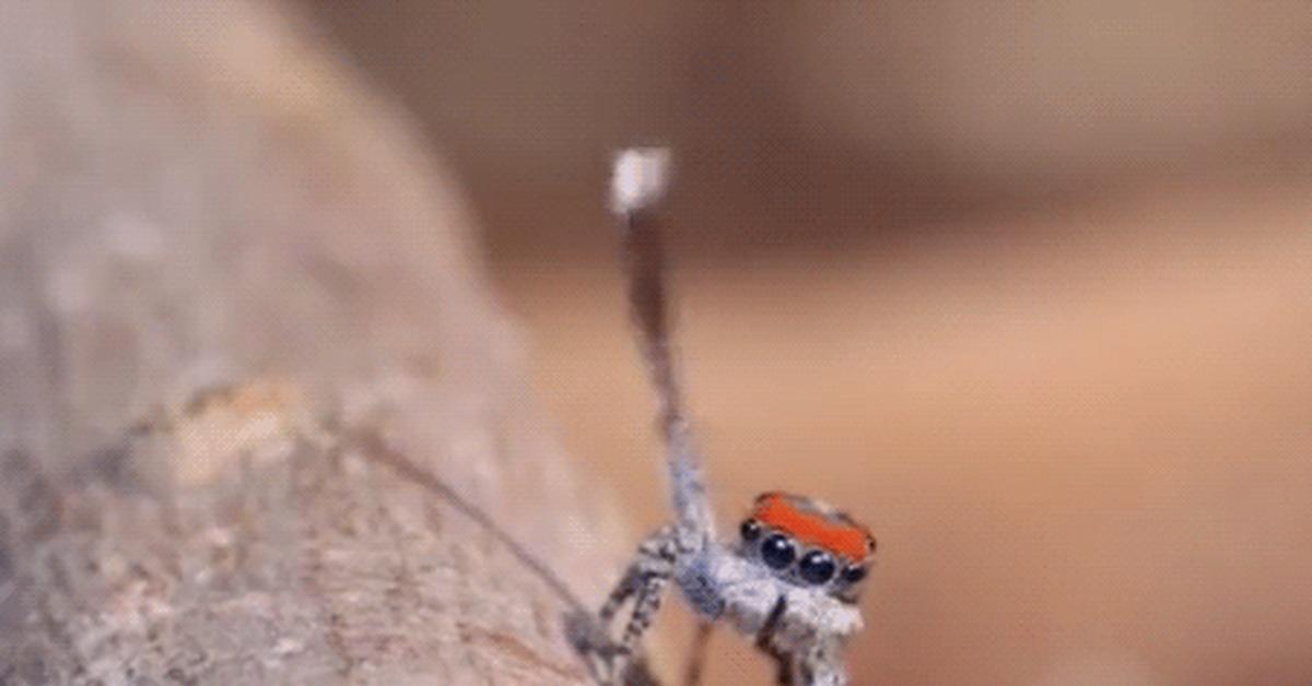 исправно заработал, гифка милый паук наши