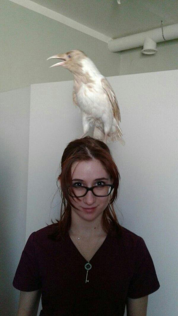 Птичка. Ветеринария, Альбиносы, Девушки, Рыжие, Фотография, Ворона