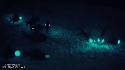 Рыбки семейства фонареглазовые