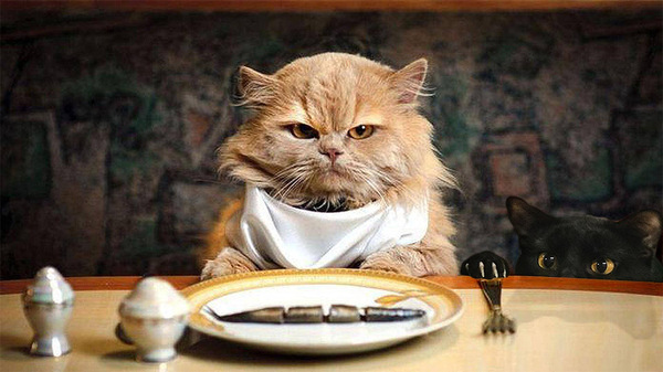 Best cat food for old cats