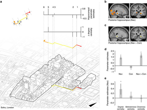 GPS-навигатор влияет на мозг новости, мозг, Открытия, гиппокамп