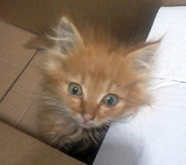 """Нашли на помойке, такого """"страшненького"""" никто не хотел брать кот, помойка, найденыш, страшненький, вырос, длиннопост"""