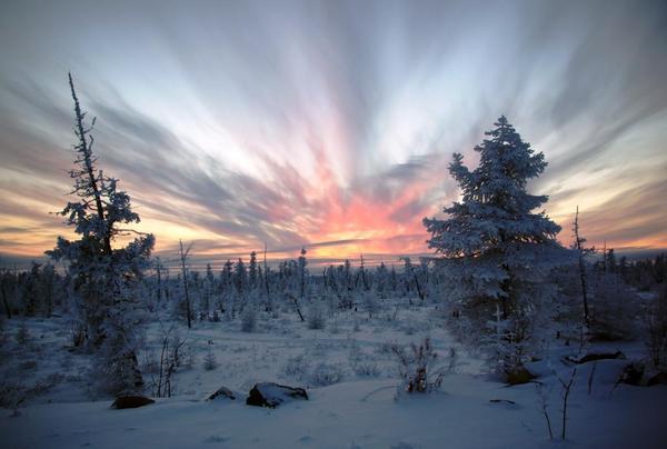 Якутские маслята. Осень, Маслята, Тайга, Грибная пора, Воспоминания, Соболь баргузинский, Длиннопост