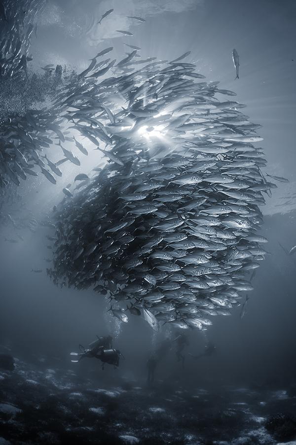 Косяк фотография, море, Стая, подводой, филиппины